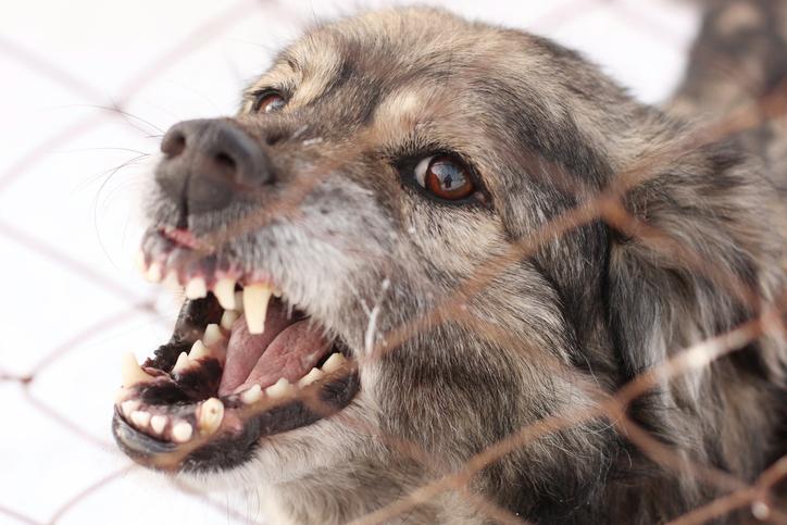 DOG FIGHTING UPDATE