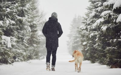 Dogs and The Cold Weather