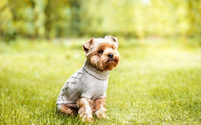 WHAT ARE THE EFFECTS OF DRESSING UP YOUR DOG