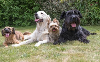 Blog - Rock Villa Canine Care